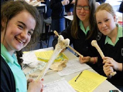 KS3 Students Analysing Bones in Body in the Box Workshop